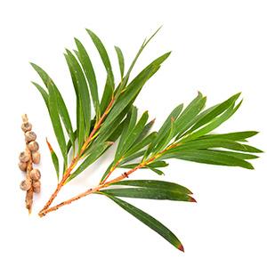 Mamaearth tea tree face scrub with Tea Tree