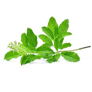 tea tree scrub for acne with tulsi